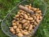 Bi mi to Huus - Kartoffelernte - Kuerbisernte
