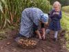 Bi mi to Huus - Kartoffelernte mit Kindern